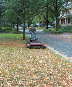 no_rake_leaves