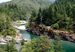 082814_Paradise-Redwoods